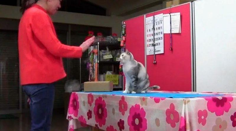 Un gato extremadamente bueno aprendió a copiar los movimientos humanos
