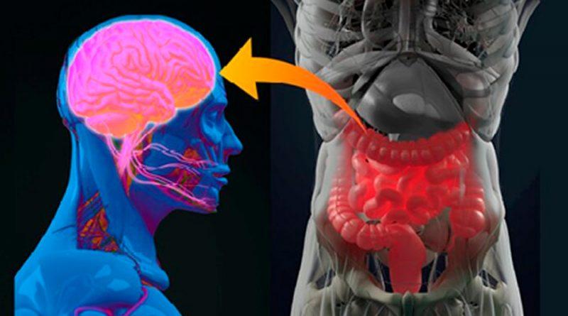 Descubren clave que activa la diabetes: un bloqueo en la comunicación entre el intestino y el cerebro