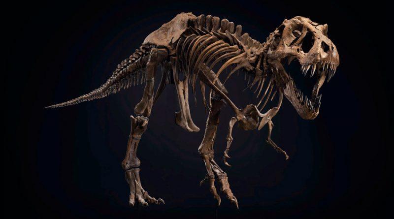 Subastan por 27 millones de euros el fósil del dinosaurio T. Rex Stan