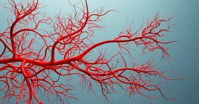 Una arteria del antebrazo revela que la evolución humana continúa