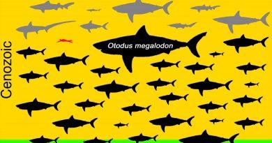 El extinto Megalodón excede todas las tablas corporales de los tiburones; media hasta 15 metros