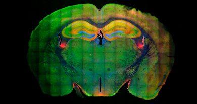 Descubren el mecanismo molecular que graba nuestros recuerdos en el cerebro