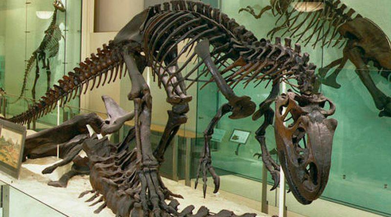Sale a subasta el esqueleto de un alosaurio