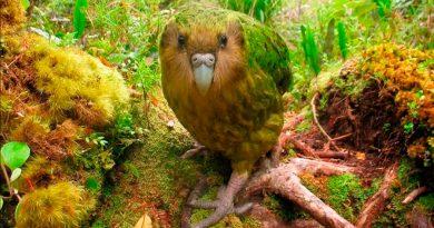 Estudio alerta de la amenaza sobre especies raras y su papel ecológico