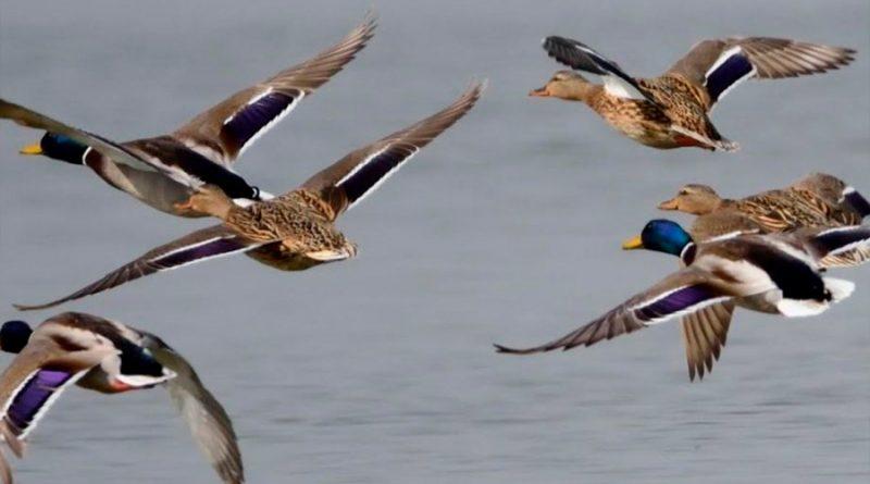 Las rayas de los animales indican al grupo en qué dirección huir de depredadores