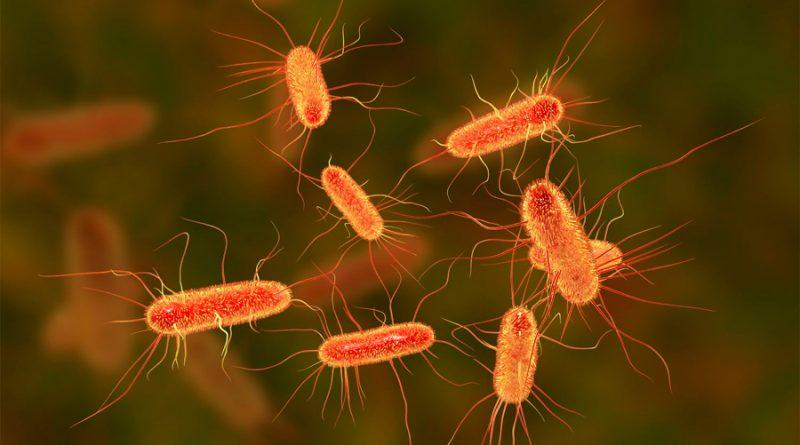 El veneno de avispa se transforma en un antibiótico para combatir bacterias multirresistentes
