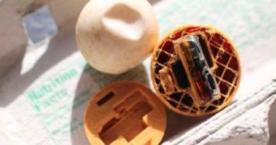 Diseñan huevos de tortuga falsos con GPS para rastrear a traficantes