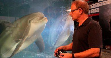 Este delfín robot quiere salvar del cautiverio a los de verdad