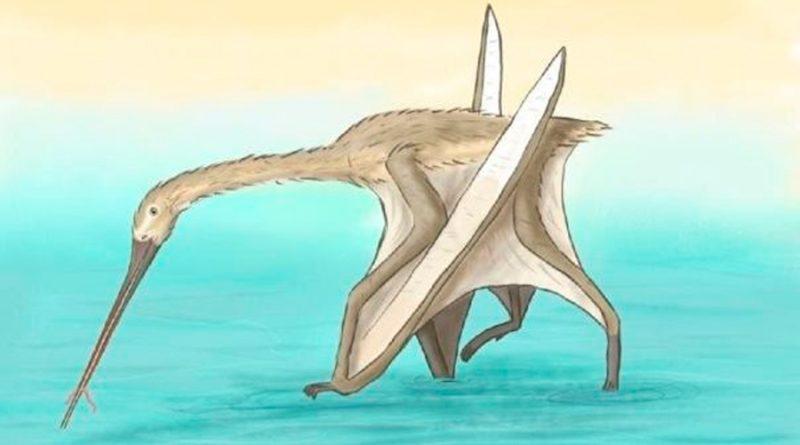 Descubren una especie única de pterosuario con largo pico similar al kiwi