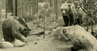 Estos son los animales endémicos de México que ya se extinguieron