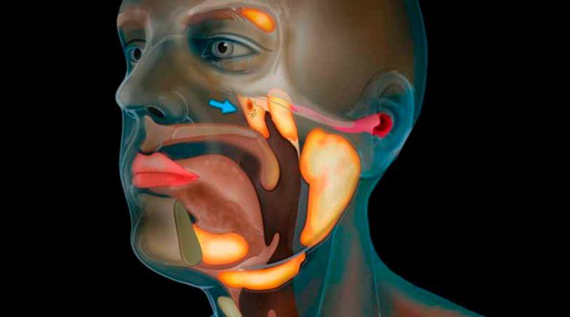 Científicos descubren nuevo órgano desconocido en la cabeza
