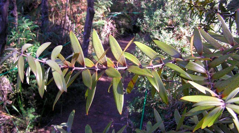 Iniciativa para renombramientos indígenas de plantas y animales
