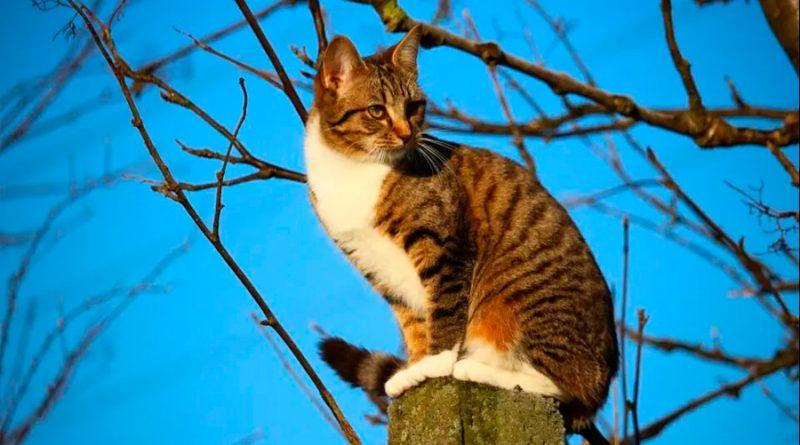 ¿Por qué un gato tiene siete vidas?: esta es la ciencia que hay detrás de sus 'superpoderes'