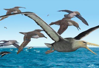 Aves gigantes surcaron los océanos australes hace 50 millones de años