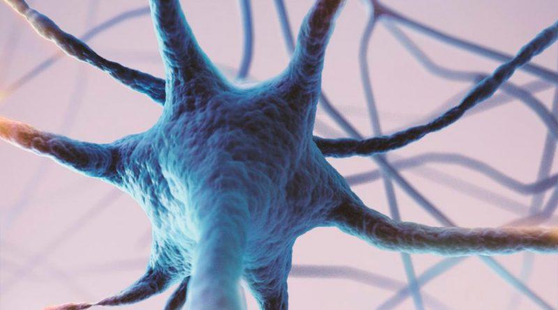 Una hormona intestinal regula la formación de nuevas neuronas en el hipocampo