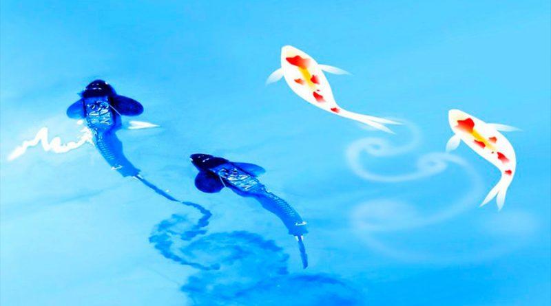 Nadar juntos ofrece beneficios hidrodinámicos a los peces
