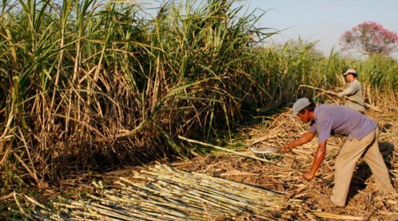 """Estado de Morelos: cañero, """"pambolero"""", resiliente y ¿productor de etanol carburante?"""