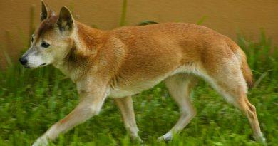 Descubren los cinco tipos de perros que ya existían en la Edad de Hielo