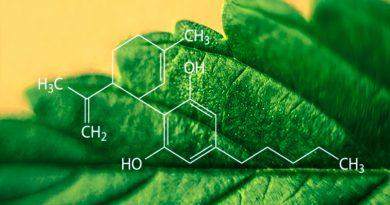 Identifican 16 nuevos componentes del cannabis