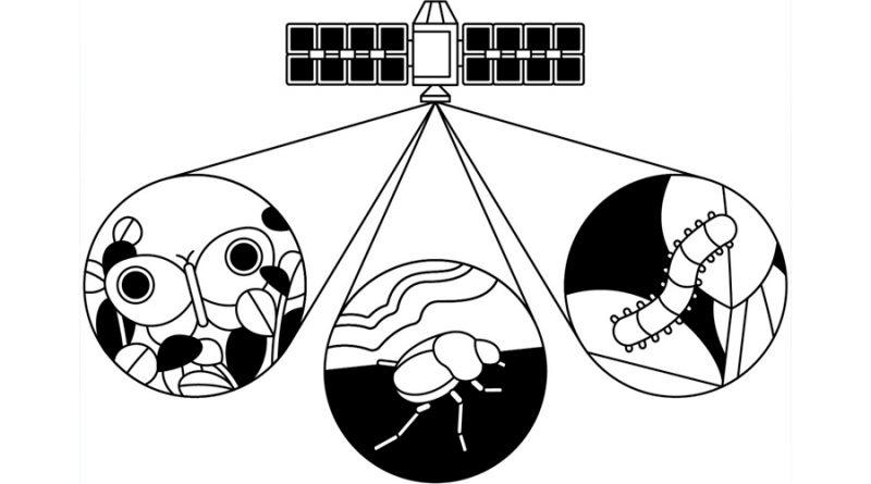 Monitorizar insectos desde el espacio para salvar el planeta