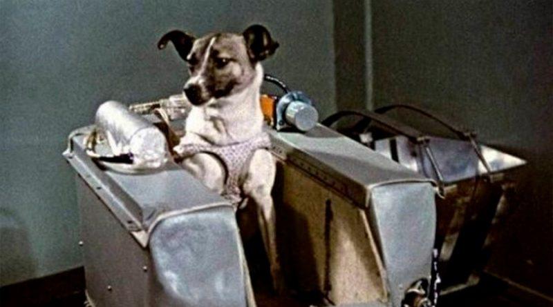 """La increíble odisea de Laika, la perrita """"pionera"""" enviada a morir al espacio"""