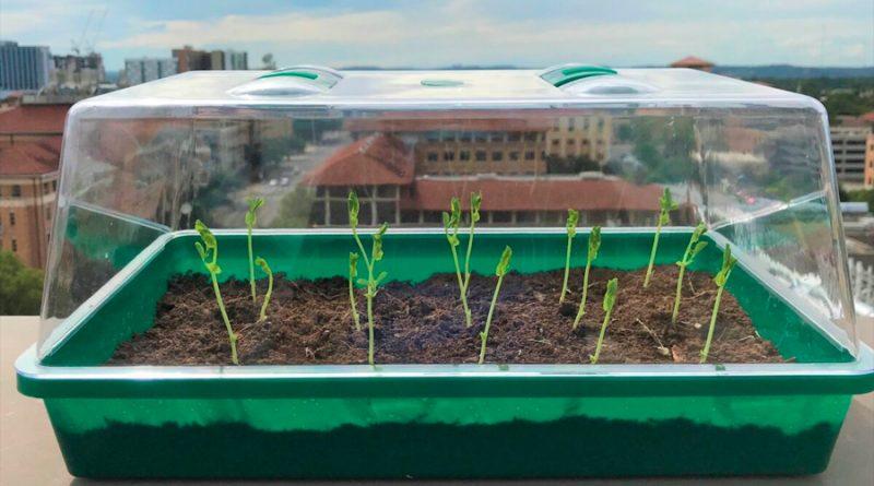 Un suelo sintético atrapa el agua del aire y la lleva a las plantas
