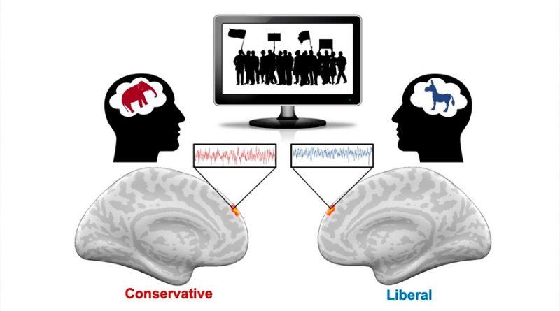 El cerebro tiene neuronas políticas