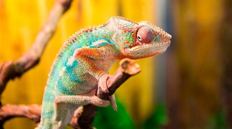Crean un nuevo material inspirado en la piel del camaleón