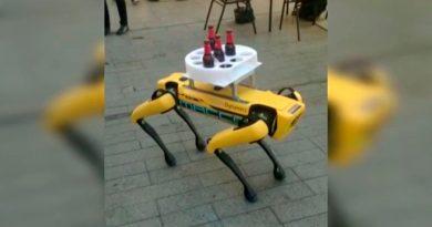 """Así es el """"perro robot"""" que ha sorprendido sirviendo las mesas en un bar de España"""