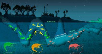 Los camarones ciegos se reparten nichos para su supervivencia