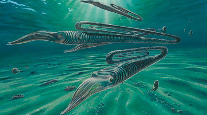 Diplomoceras máximum, el extraño animal con forma de clip que vivía hasta 200 años