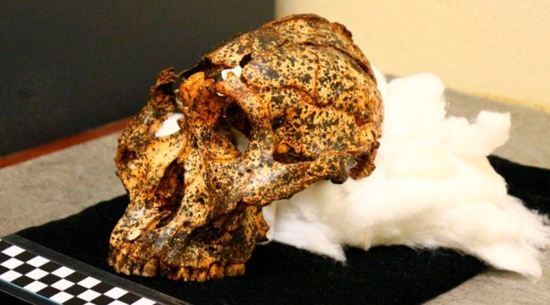 """Descubren el cráneo de dos millones de años de un """"primo"""" ancestral de los humanos"""