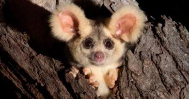 Científicos encuentran dos nuevos mamíferos en Australia