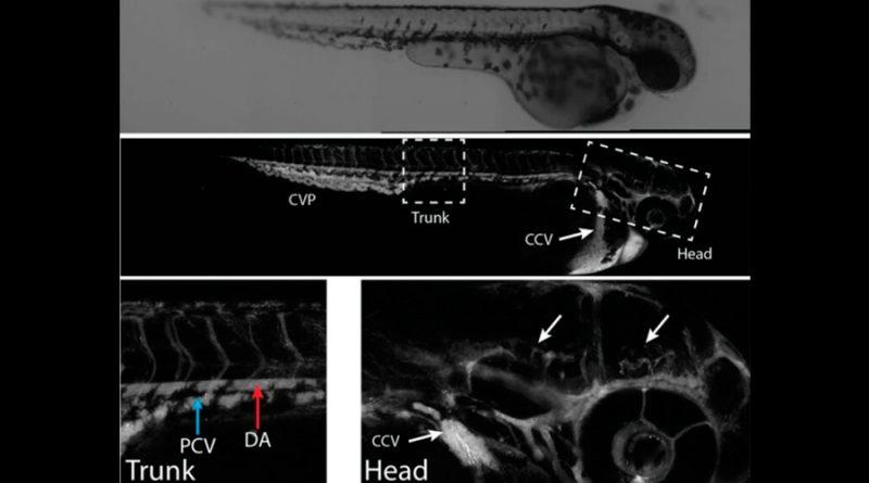 Crean nanopartículas diseñadas para curar al cerebro
