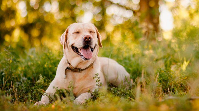 """Los perros sonríen y algunos """"hasta exageran"""", asegura experto de la UNAM"""