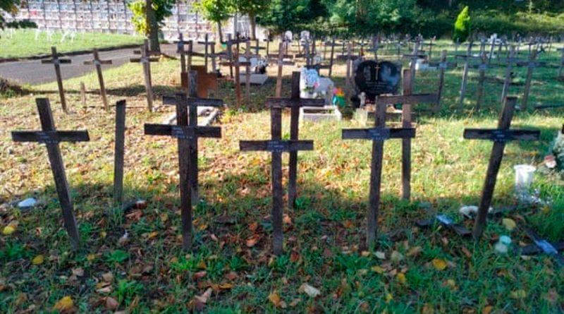 Cientos de cangrejos que pueden clonarse a sí mismos invaden un cementerio en Bélgica
