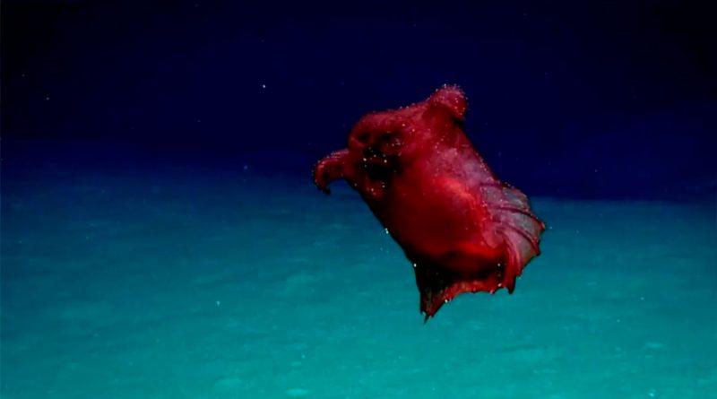 12 criaturas marinas tan fascinantes que parecen falsas