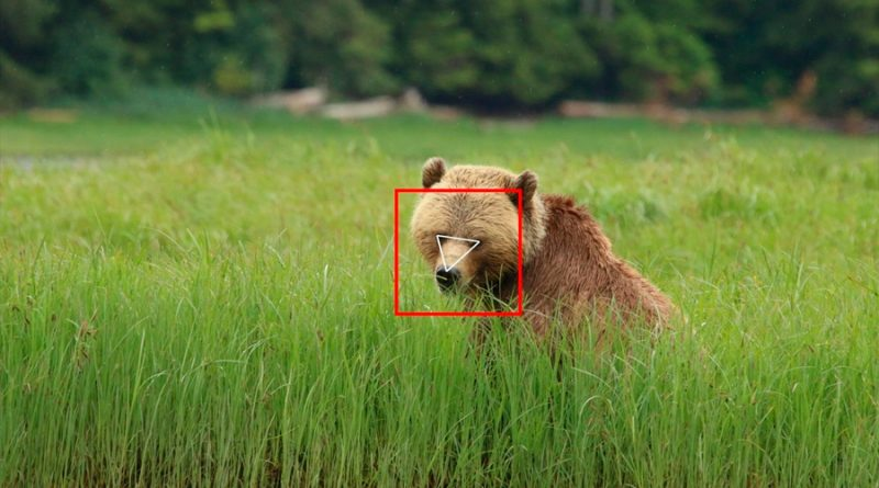 Al igual que con las personas, la IA puede hacer reconocimiento facial de osos