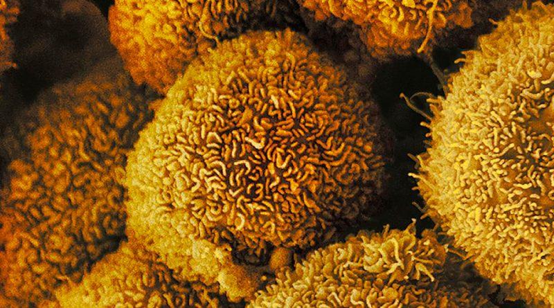 ¿Cómo se desplazan las células? Ciertas sustancias trazan su destino