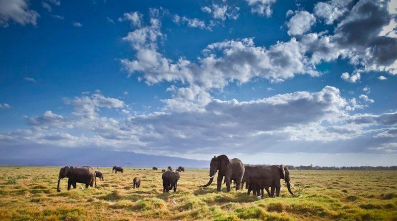 Un estudio señala que las poblaciones de vertebrados no están en declive