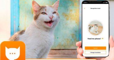 La aplicación que puede traducir los maullidos de tu gato