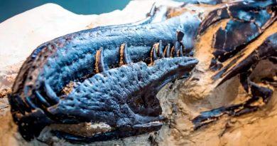 Revelan el primer esqueleto completo de un Tiranosaurio Rex