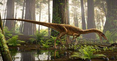 Descubren en Brasil uno de los antepasados más antiguos del T. Rex