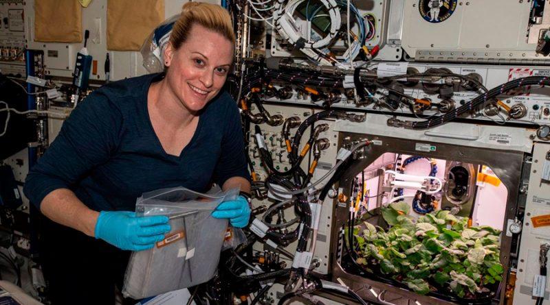 La Estación Espacial cultiva sus primeros rábanos