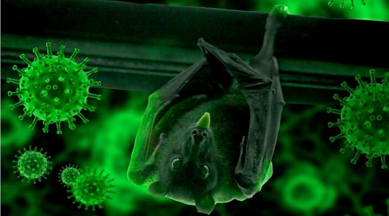 Viróloga dice que hay murciélagos con otros coronavirus con potencial de saltar a los humanos