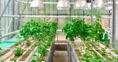 Describen la oculta y competitiva vida subterránea de las plantas