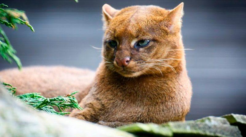5 increíbles animales mexicanos que no sabías que existían