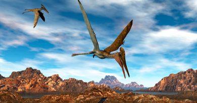 Reconstruyen el árbol genealógico del pterosaurio, el primer reptil volador
