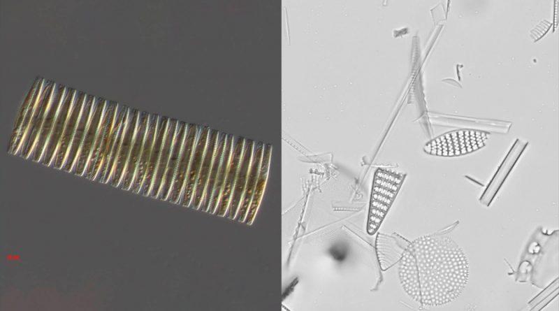 Diminutos fósiles marinos evidencian qué causó las edades de hielo