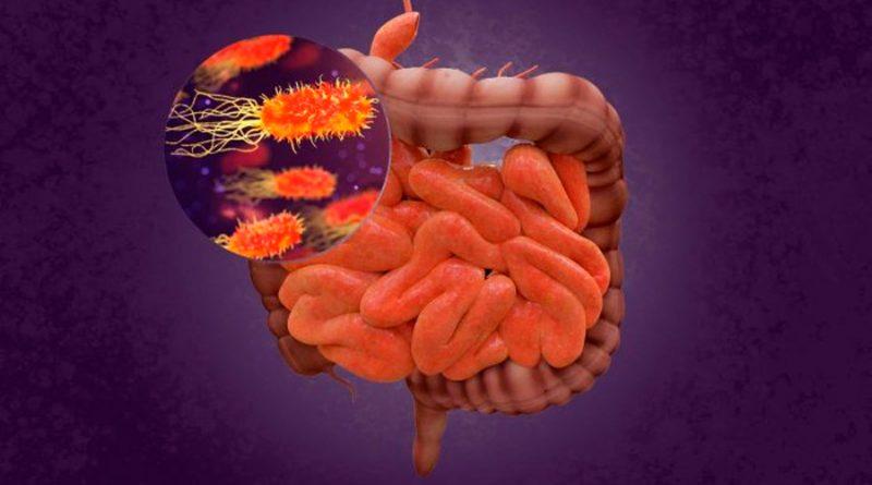 Realizan nuevos hallazgos sobre el 'cerebro abdominal', que controla el hambre